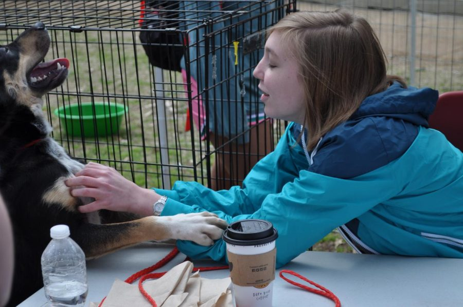 Freshman Maddie Palmer pets a dog from the Florence Lauderdale Animal Shelter at the Amphitheater March 18.