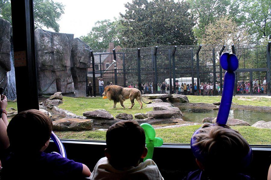 Children+celebrate+Leo+and+Una%27s+birthday+with+balloon+animals.+The+lions+turned+14.