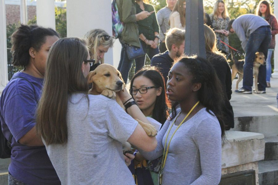 Students pet one of the Student Government Association Freshman Forum's Puppy Pageant participants Oct. 26 at the Memorial Amphitheater. The event raised money for the Florence-Lauderdale Animal Shelter and allowed students to adopt any of the pageant participants.